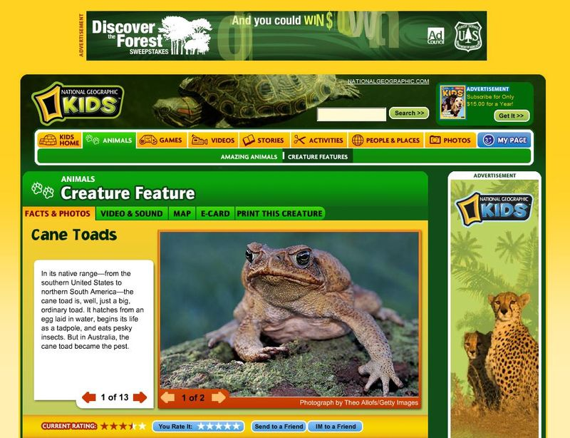 Frog site